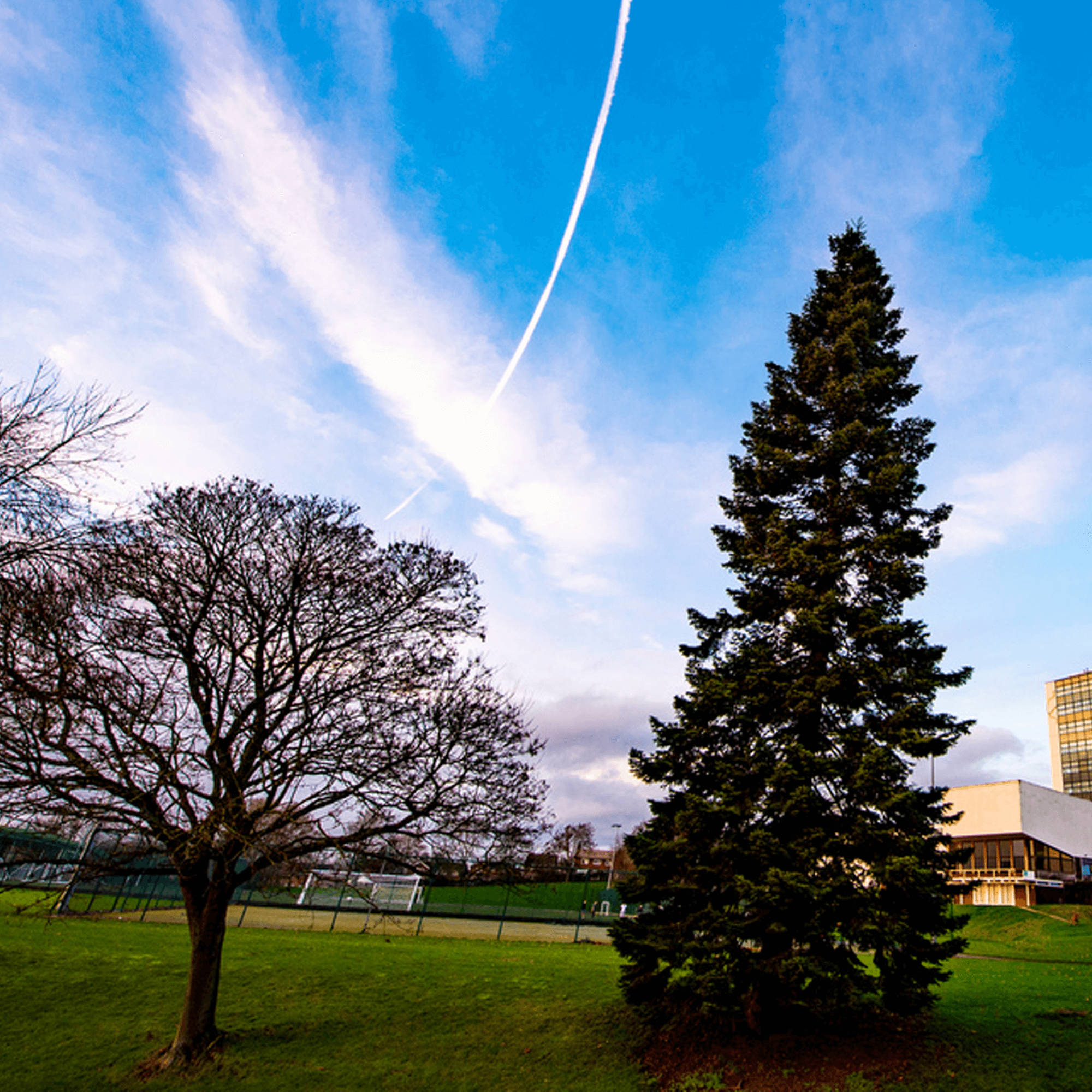 Two trees and a blue cloudy sky