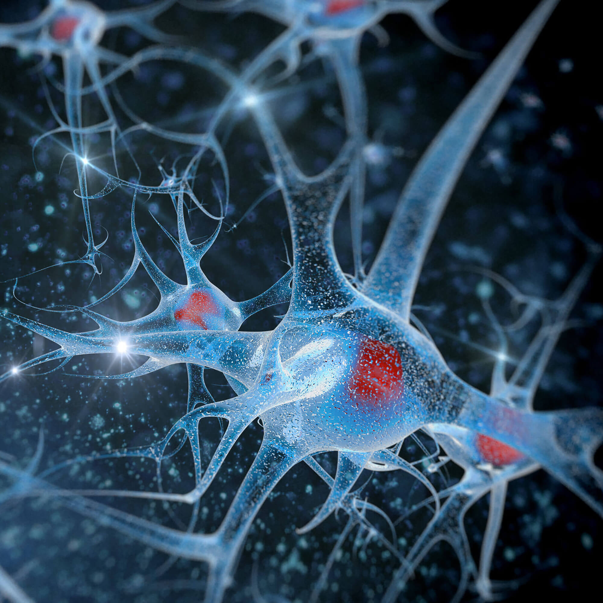 Microscopic view of neurons