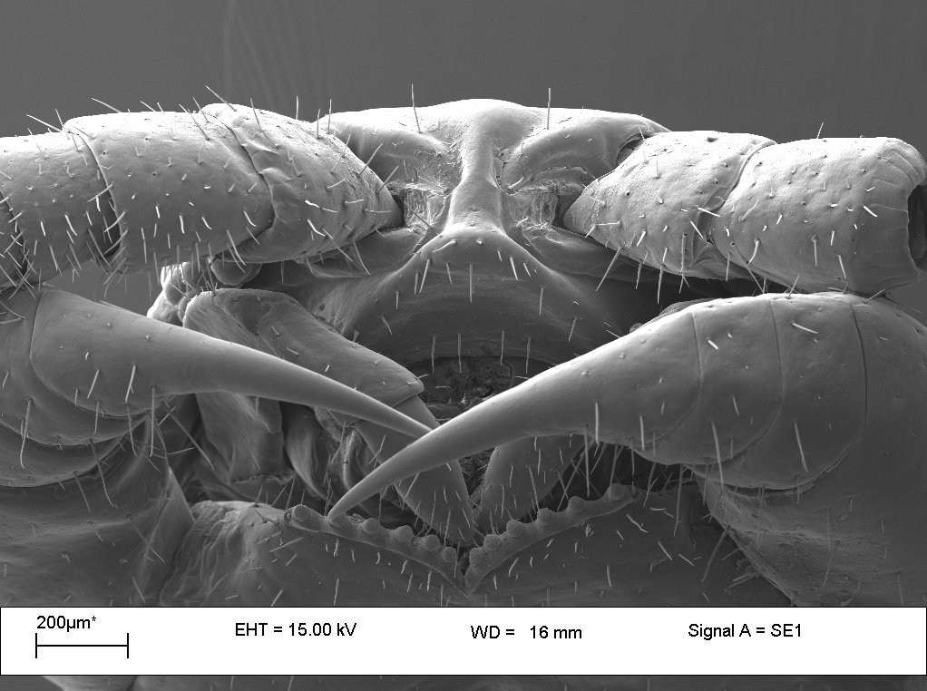 Photo of Centipede from SEM