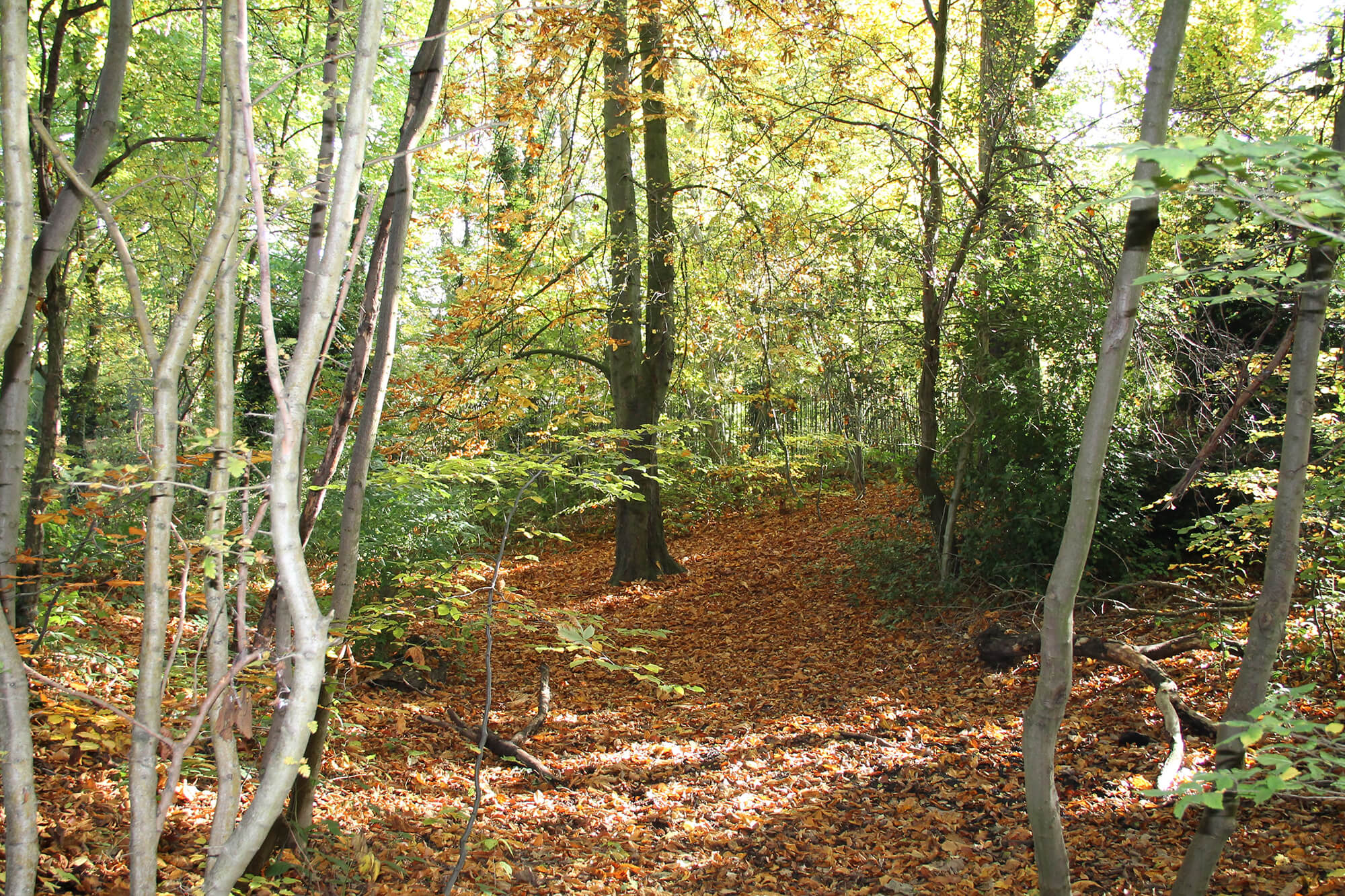 The forest used for outdoor learning and forest school sessions