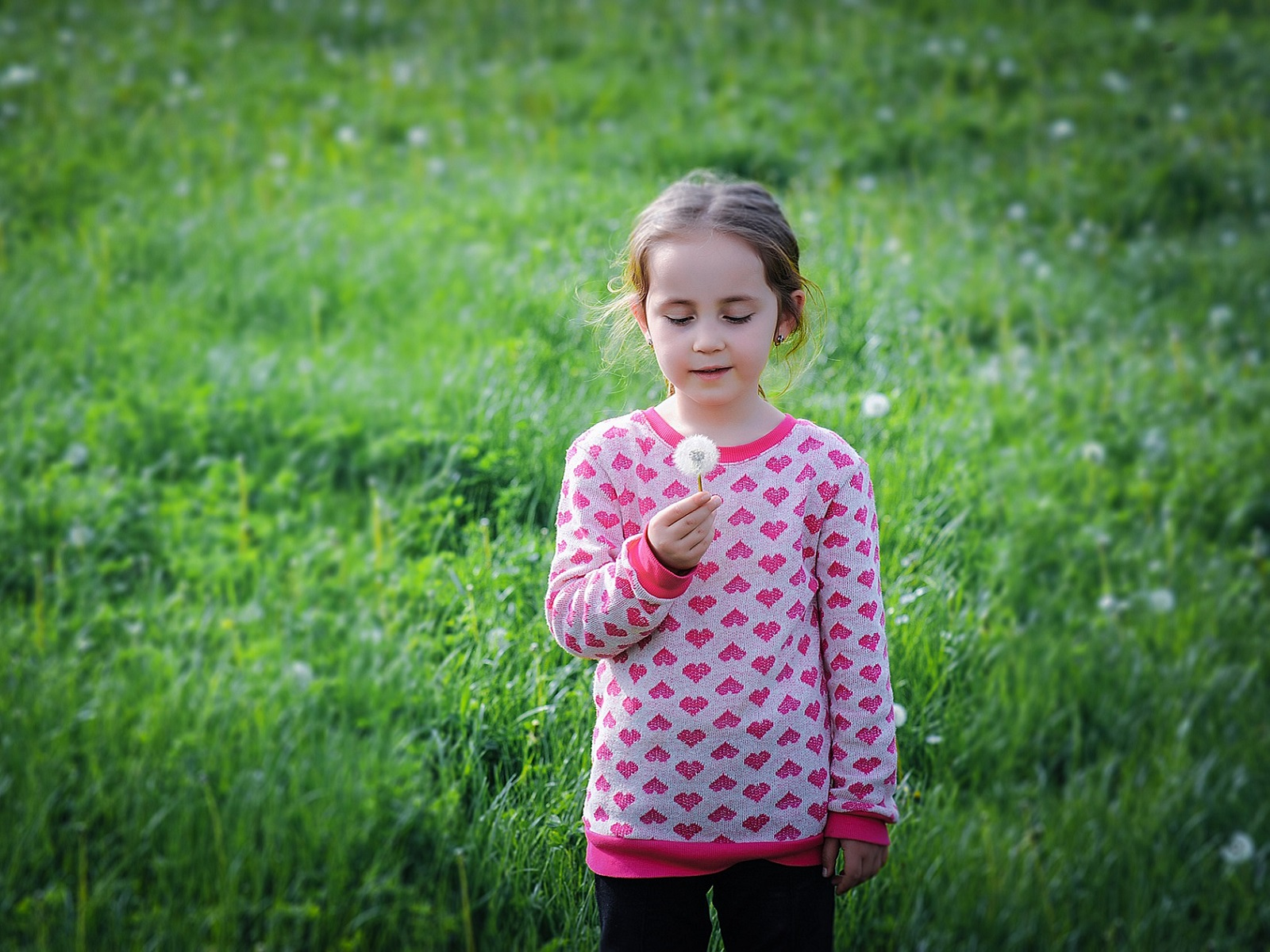 A young girl standing in a meadow with a dandelion