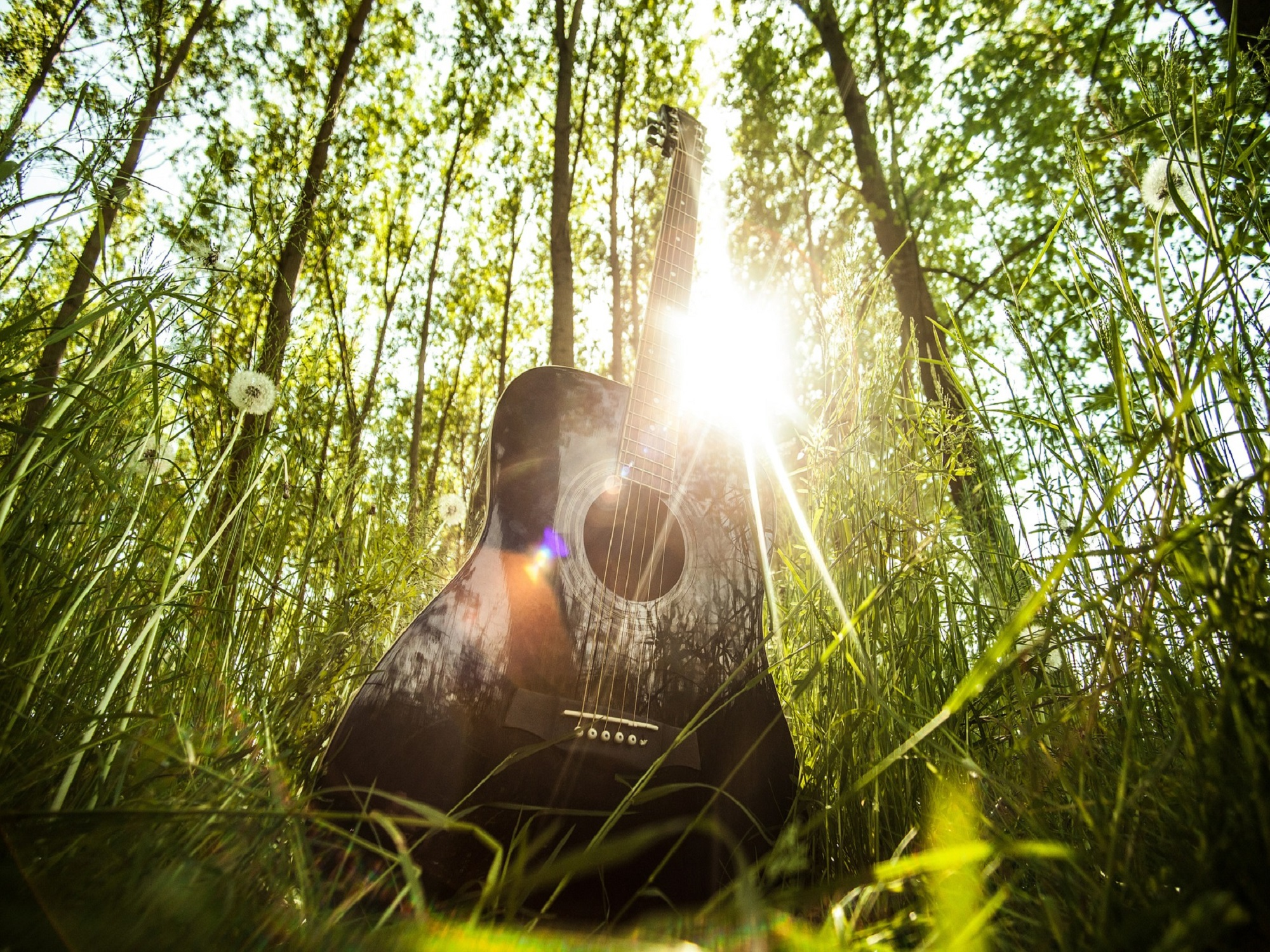 An acoustic guitar in nature