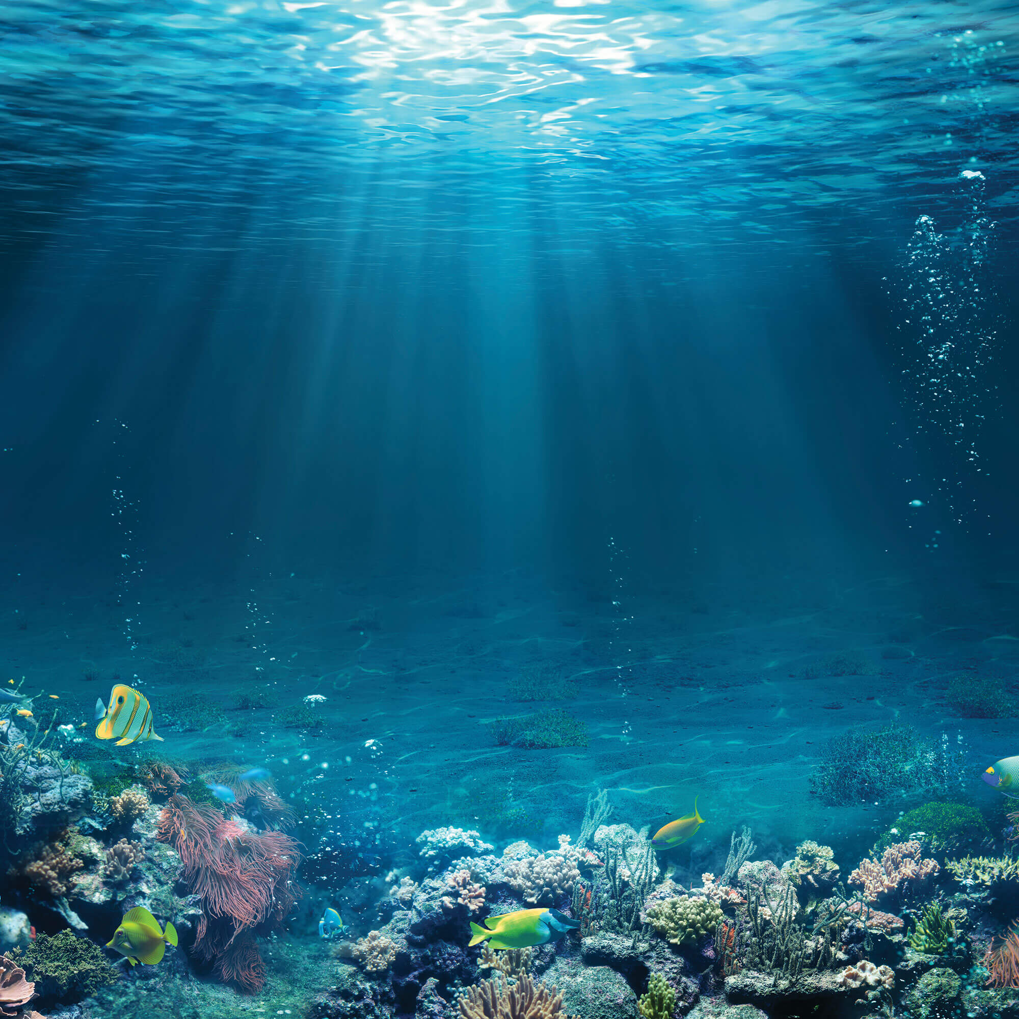 Underwater view of sunlight shining through surface of water