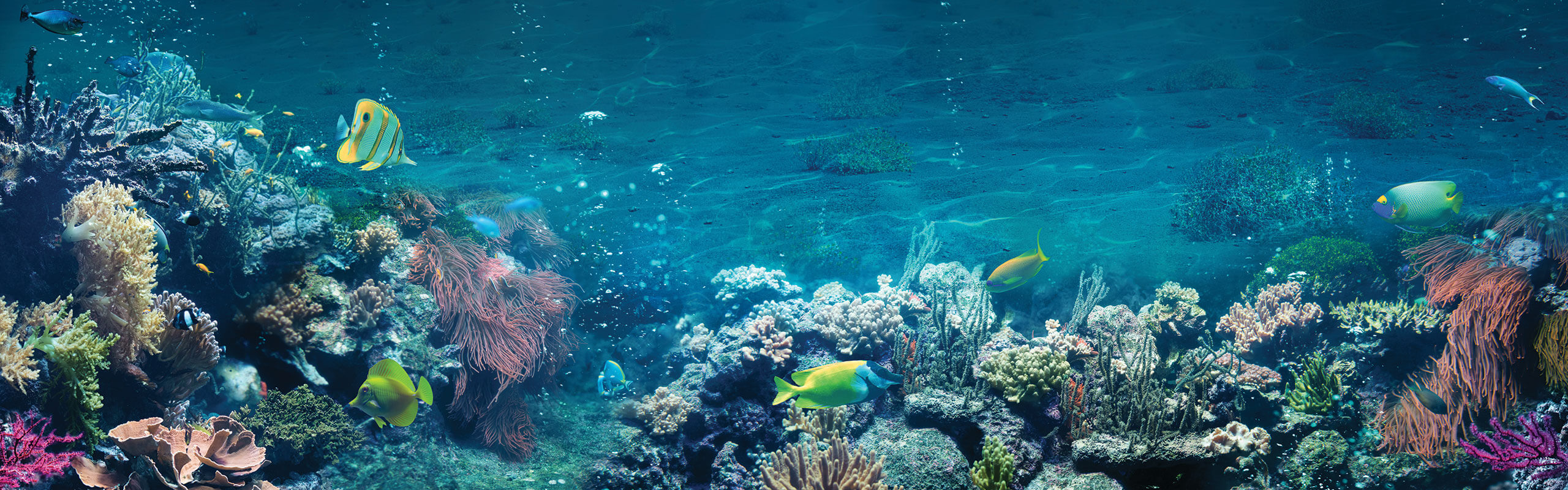 Underwater view of fish and coral