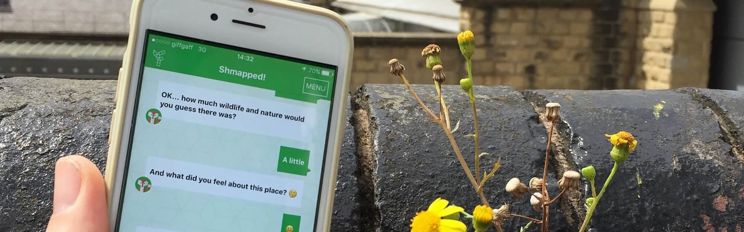 View of wellbeing app on iphone screen, with flowers in background