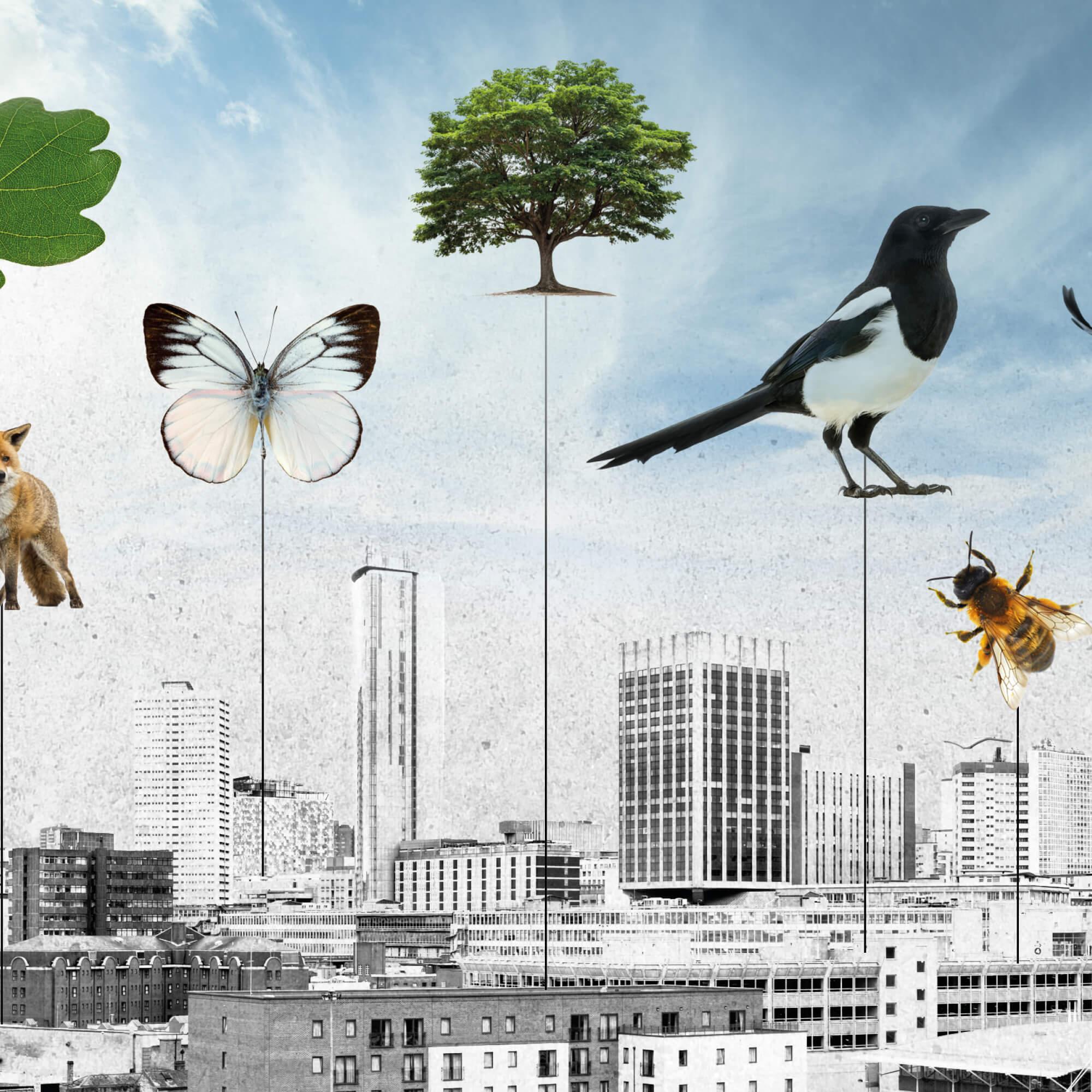 nature against a city backdrop