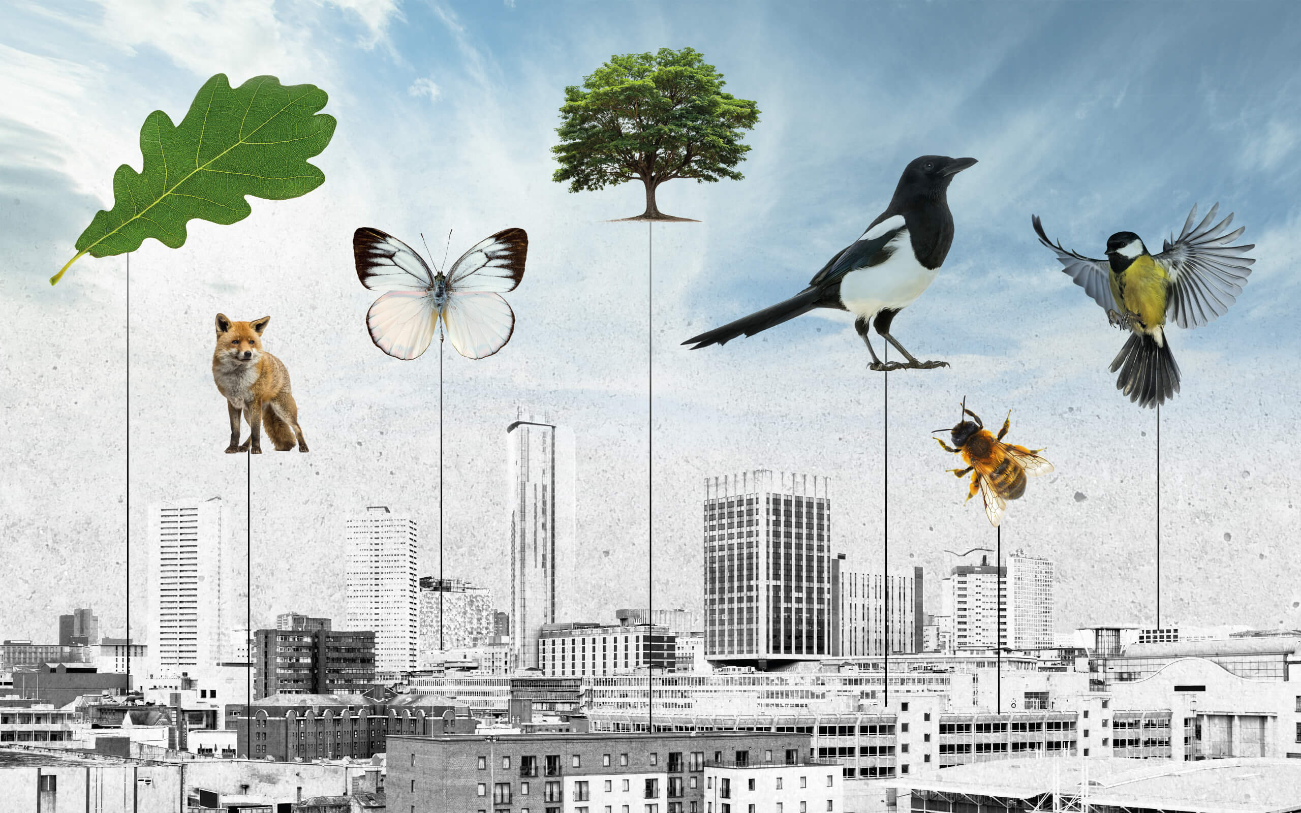 A city backdrop of skyscrapers and urban buildings, with nature images overlaid, including birds, butterflies and leaves