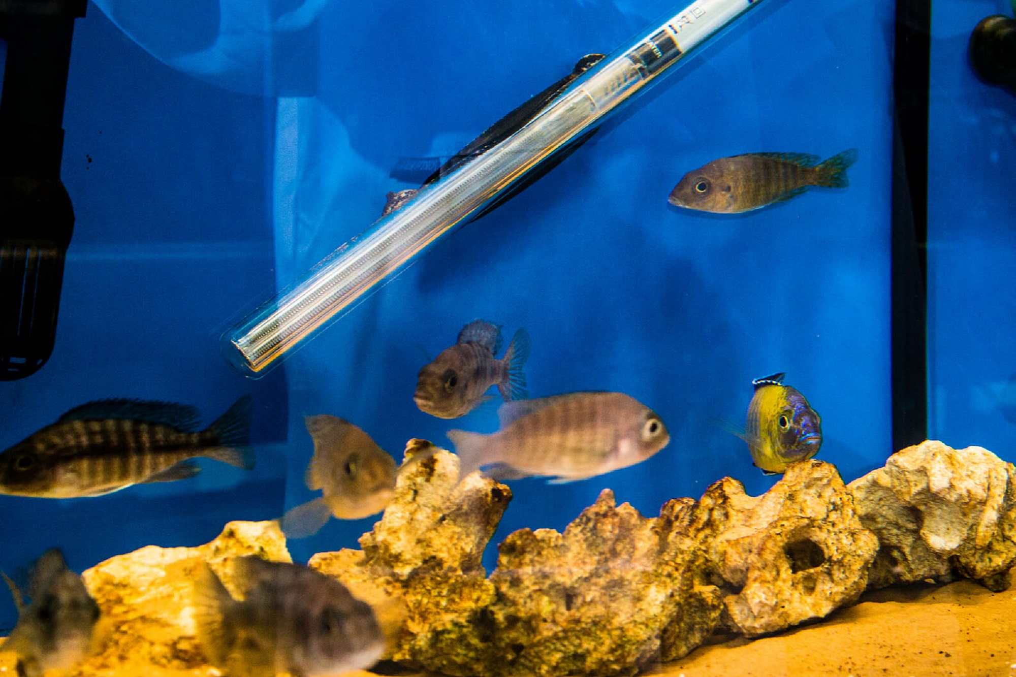 samples being taken from a fish tank in a lab