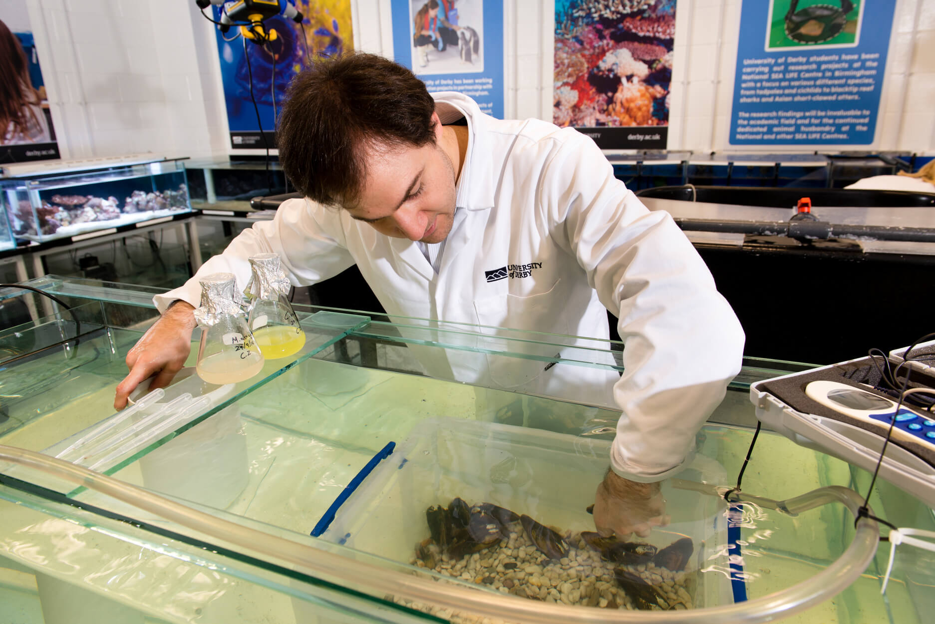 Researcher studying mussels in tank