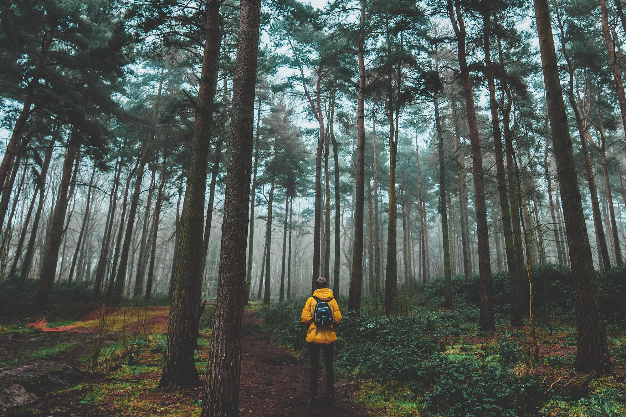 Forest containing person in a yellow jacket standing amongst tall trees