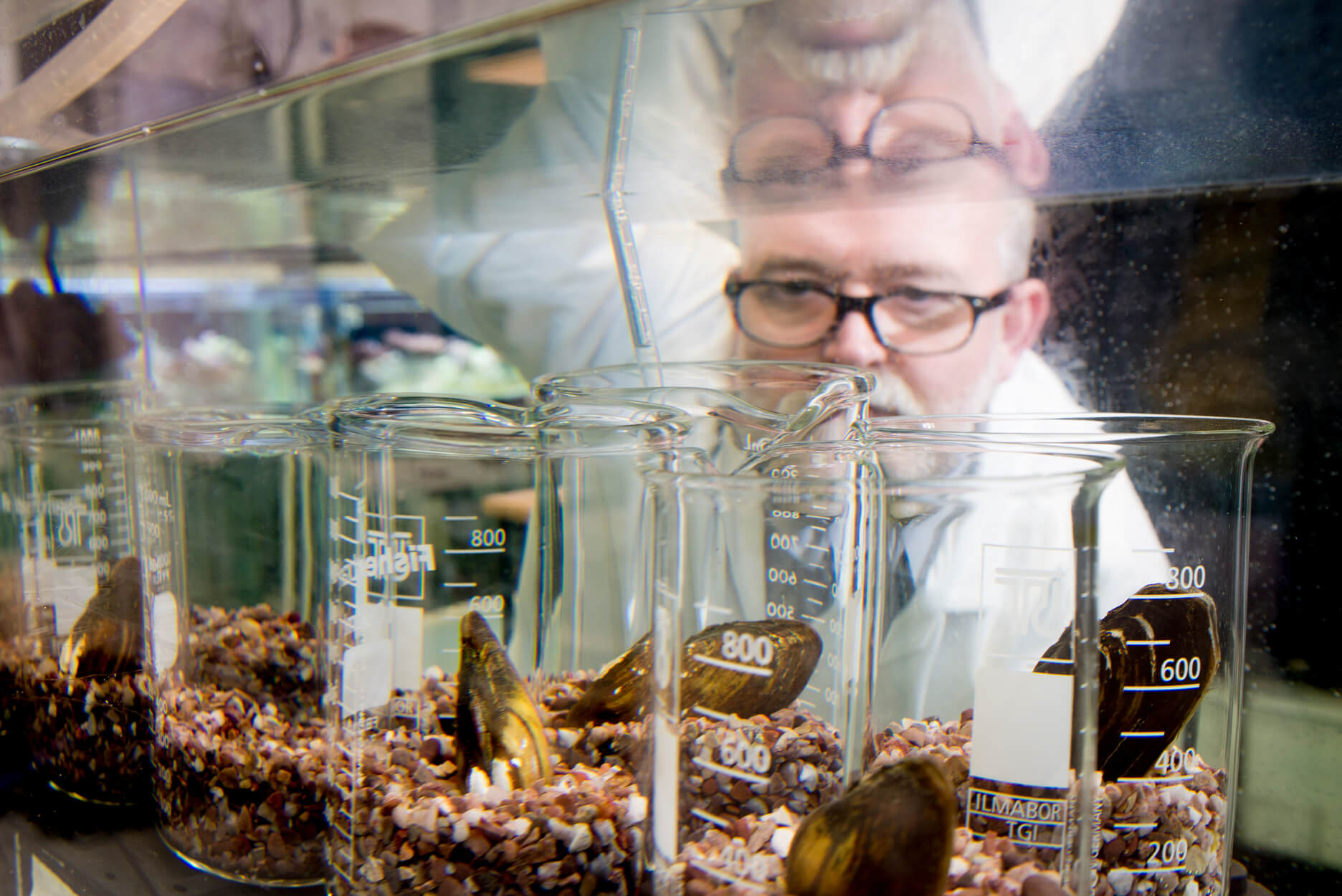 Researcher studying mussels