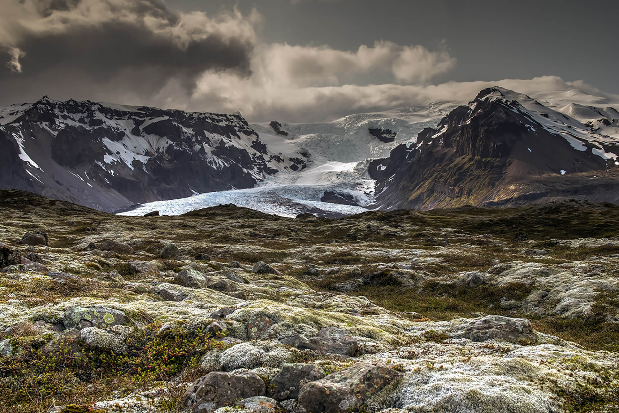 Recently de-glaciated land in front of the Kvíárjökull glacier