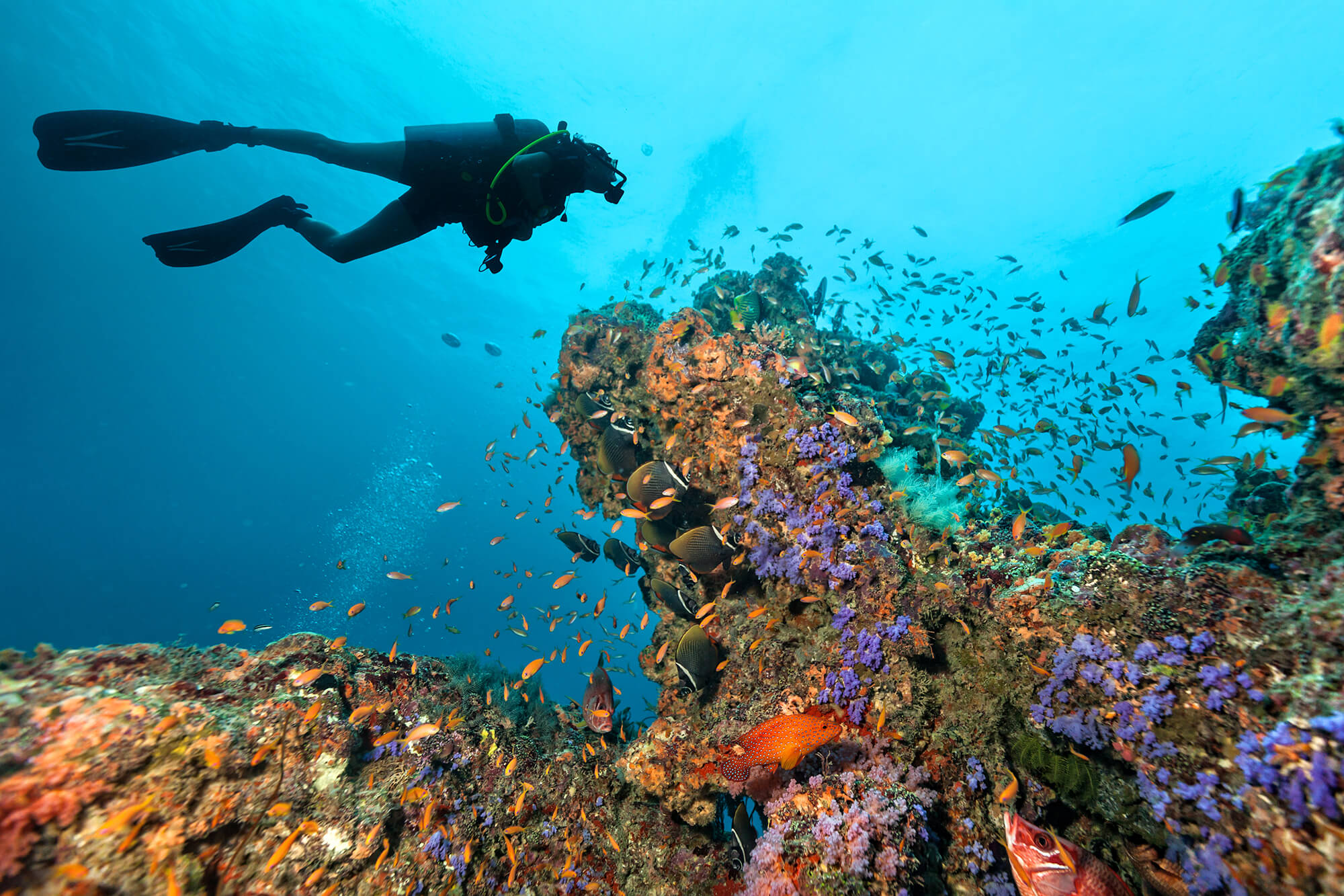 a diver swimming round a coral reef