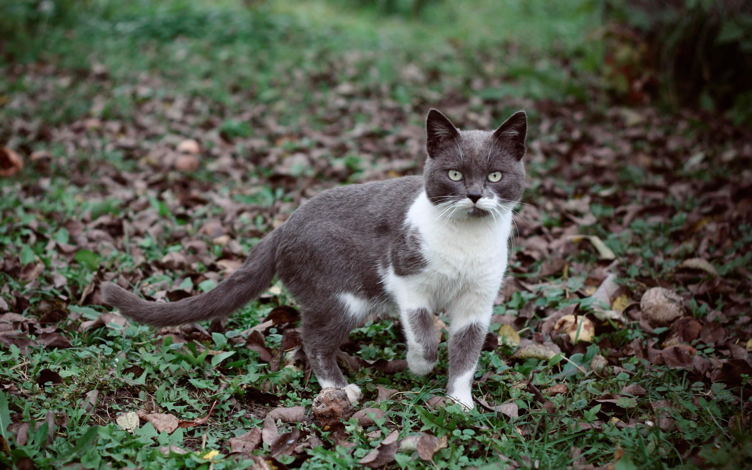 a cat sitting outside in a garden