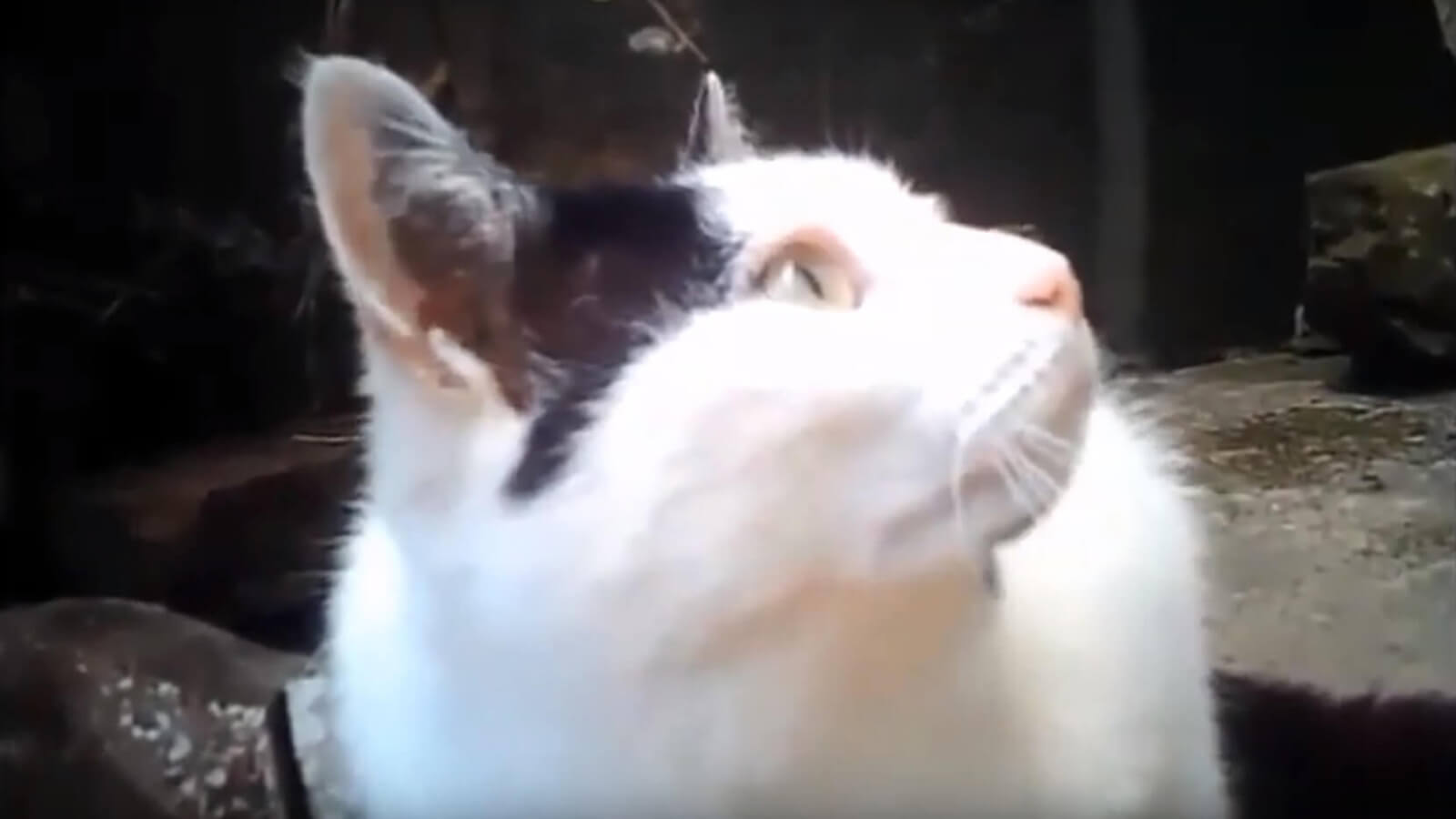 video footage from Treacle's cat camera