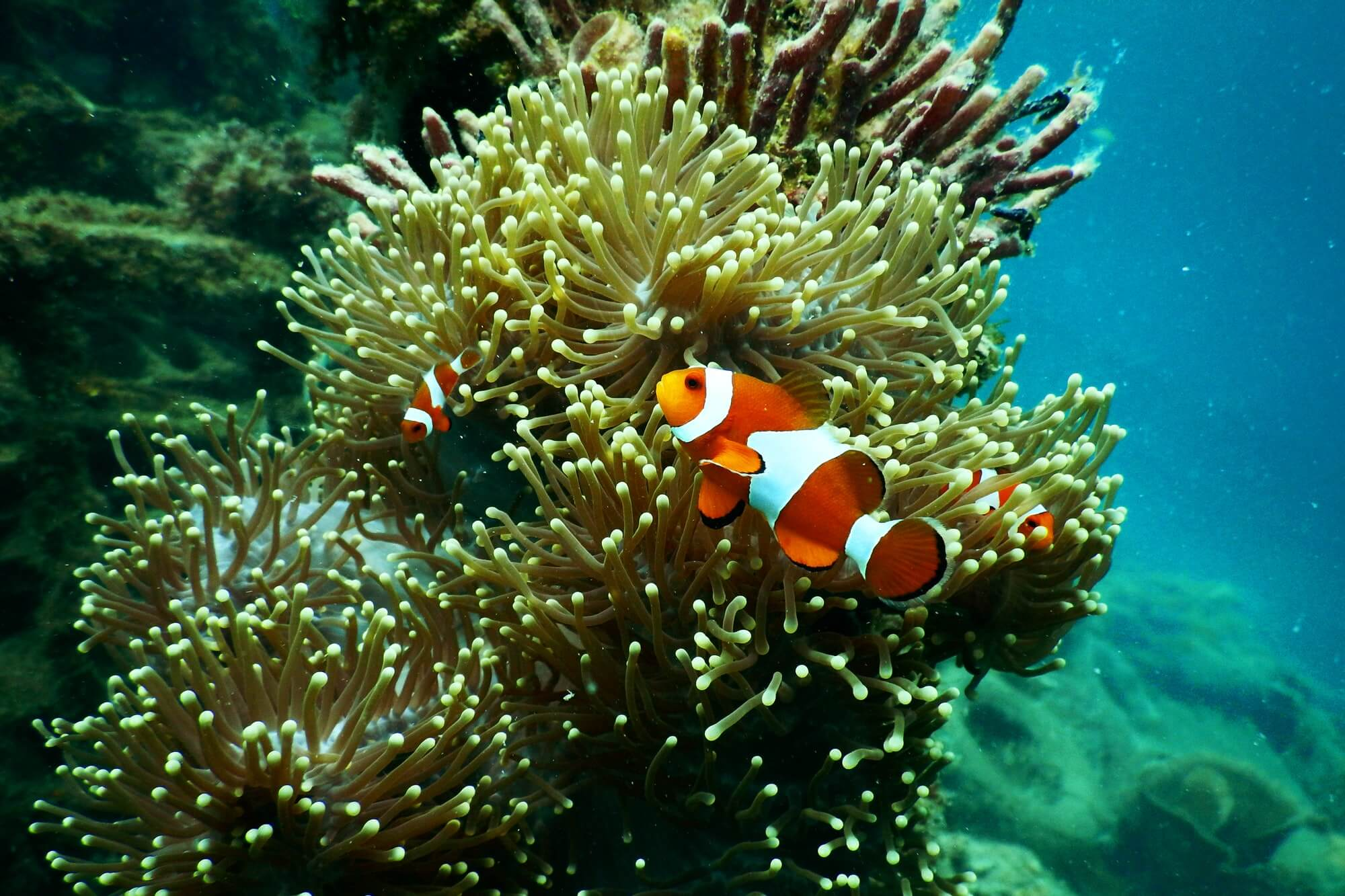 Orange and white fish in coral reef