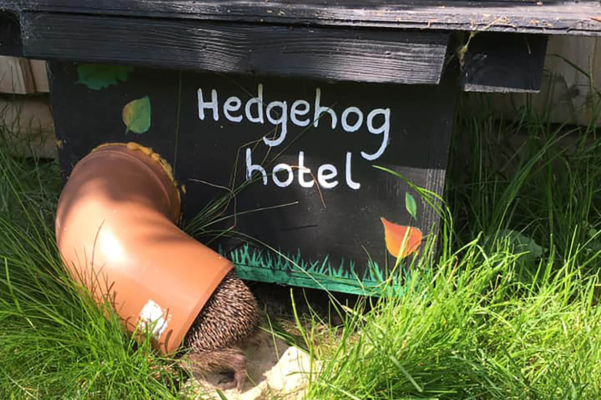 A DIY shelter for hedgehogs