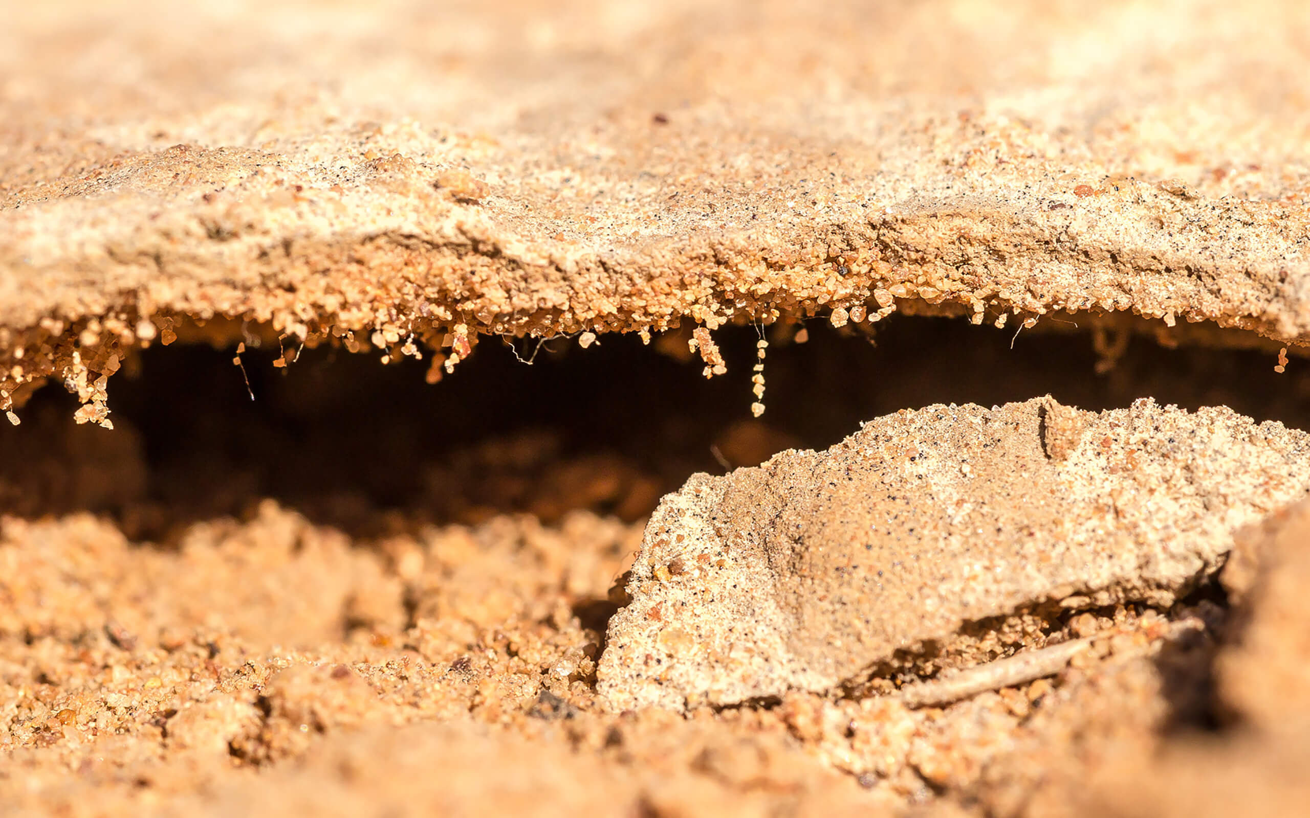a biocrust showing how the grains of soil have been held together