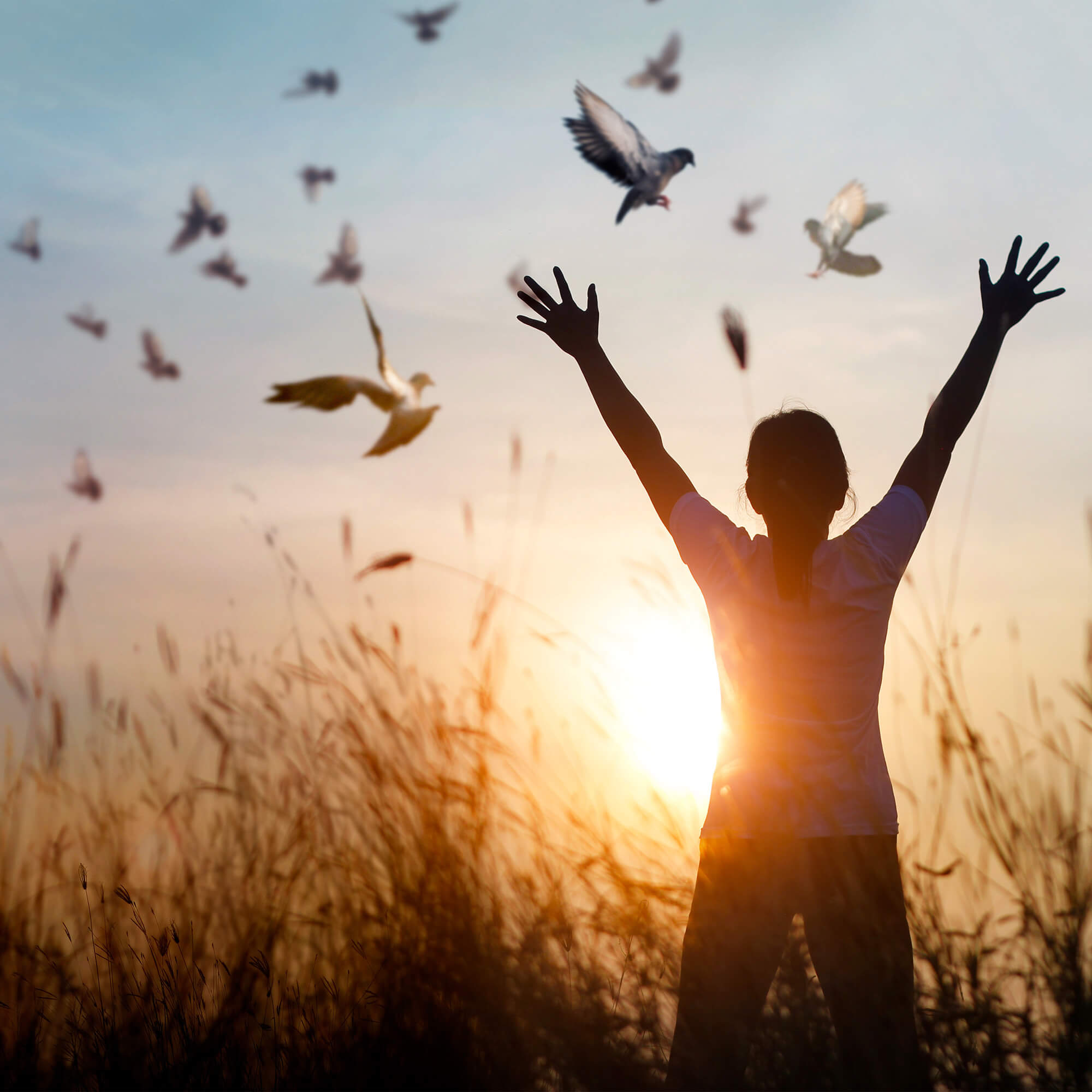 person in a field of tall wild grasses salutes the sunset as birds fly overhead