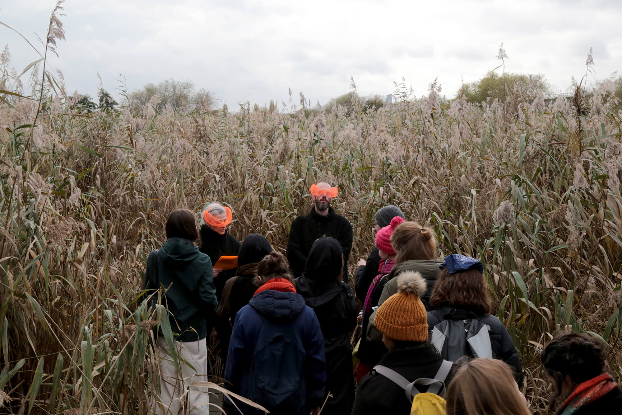 artists perform to an audience group in the middle of a reed bed