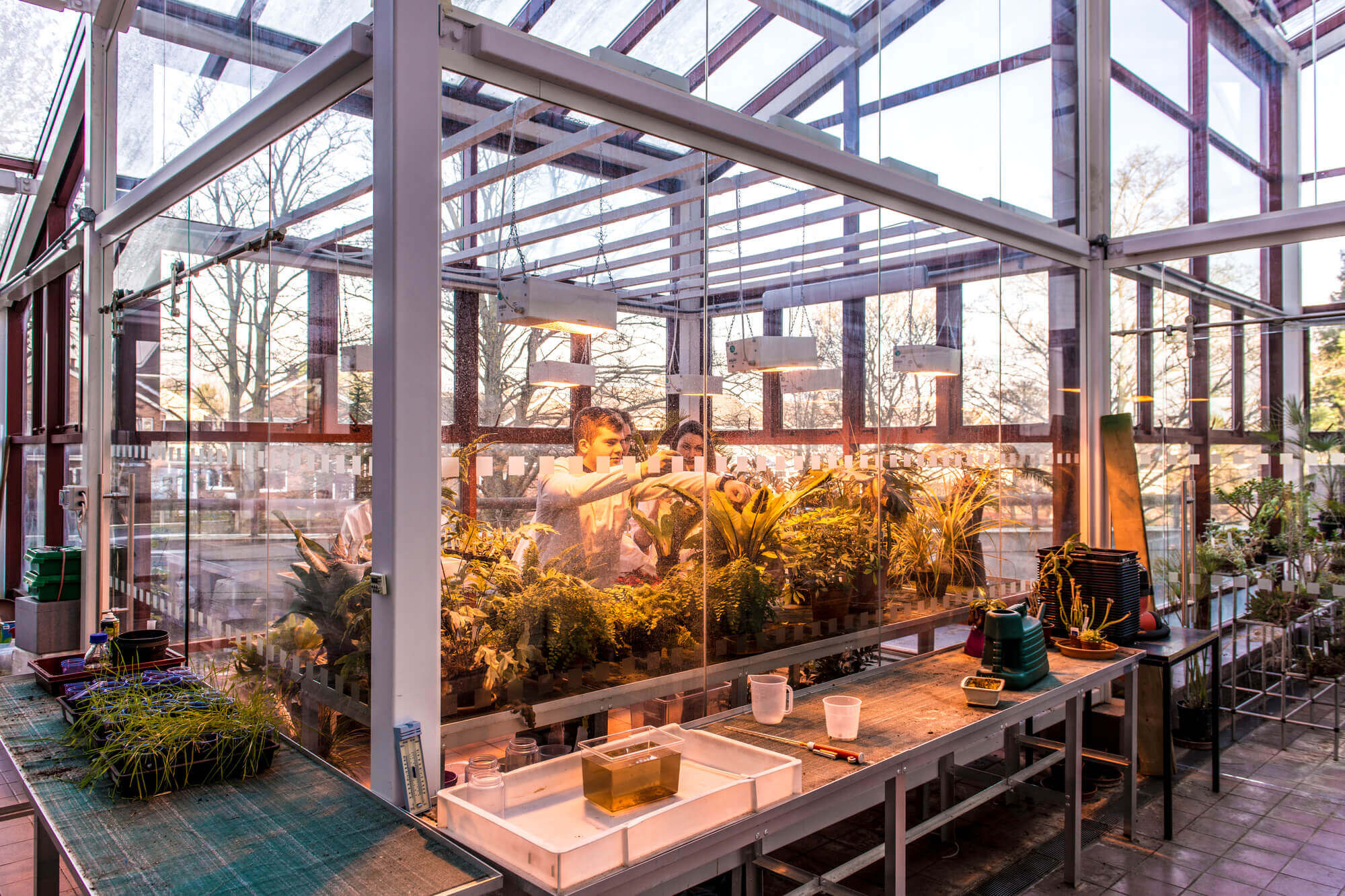 Wide shot of the facilities in the glasshouse