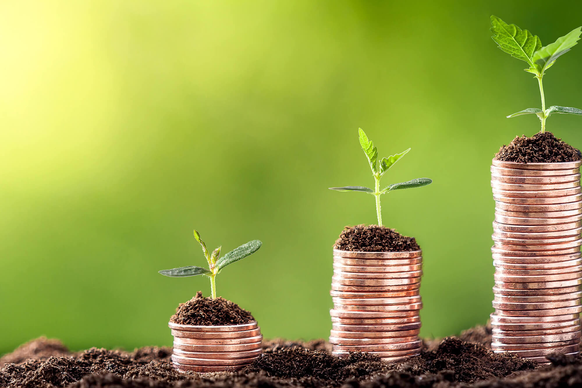 Three piles of coins are lined up against a green background in soil. Each of them features a small plant growing out the top of them.