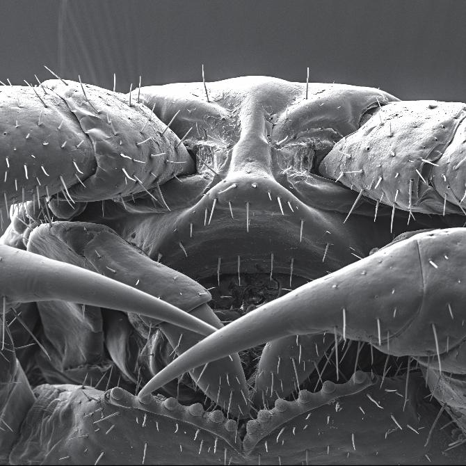 Scanning Electron Microscope (SEM) scan