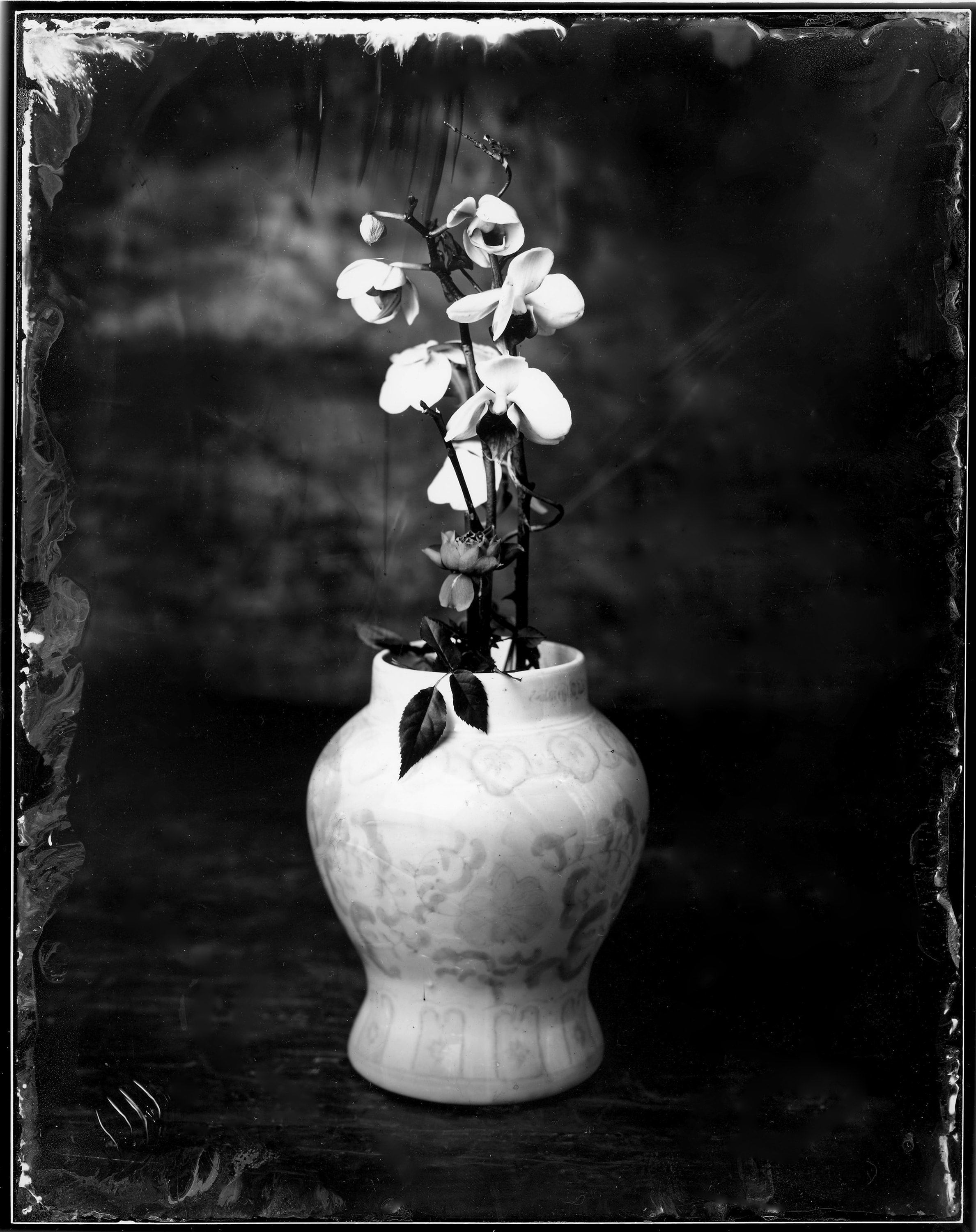 Black and white photo of an orchid in a vase