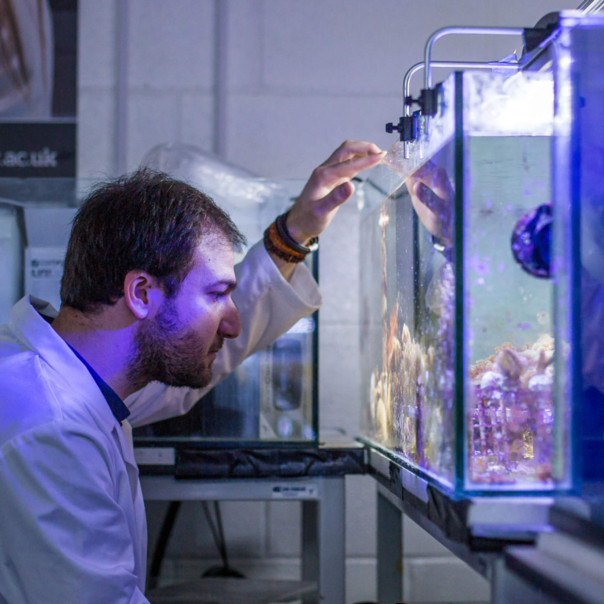 A male student looking into a coral tank