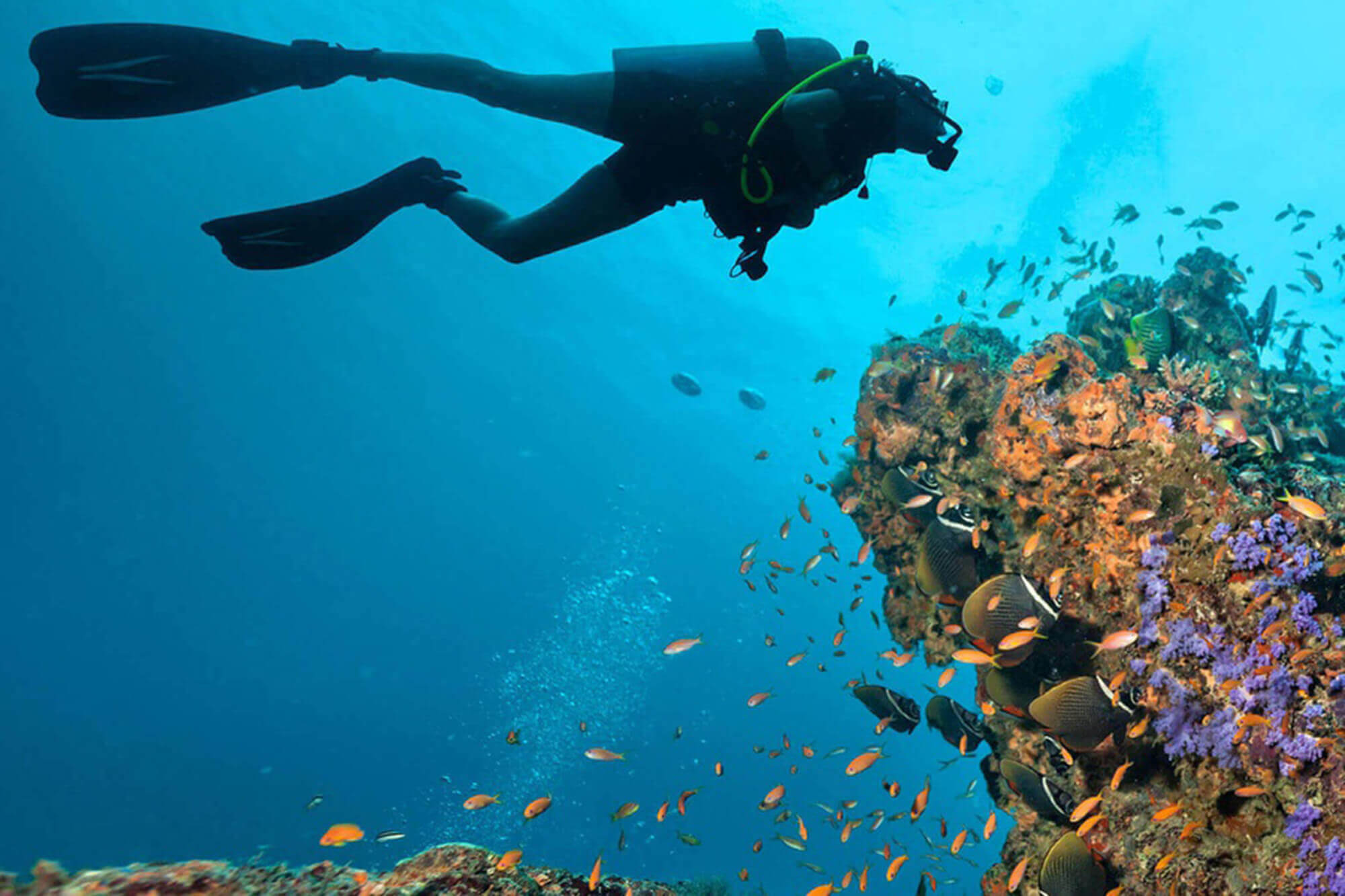 A diver swimming around corals and fishes
