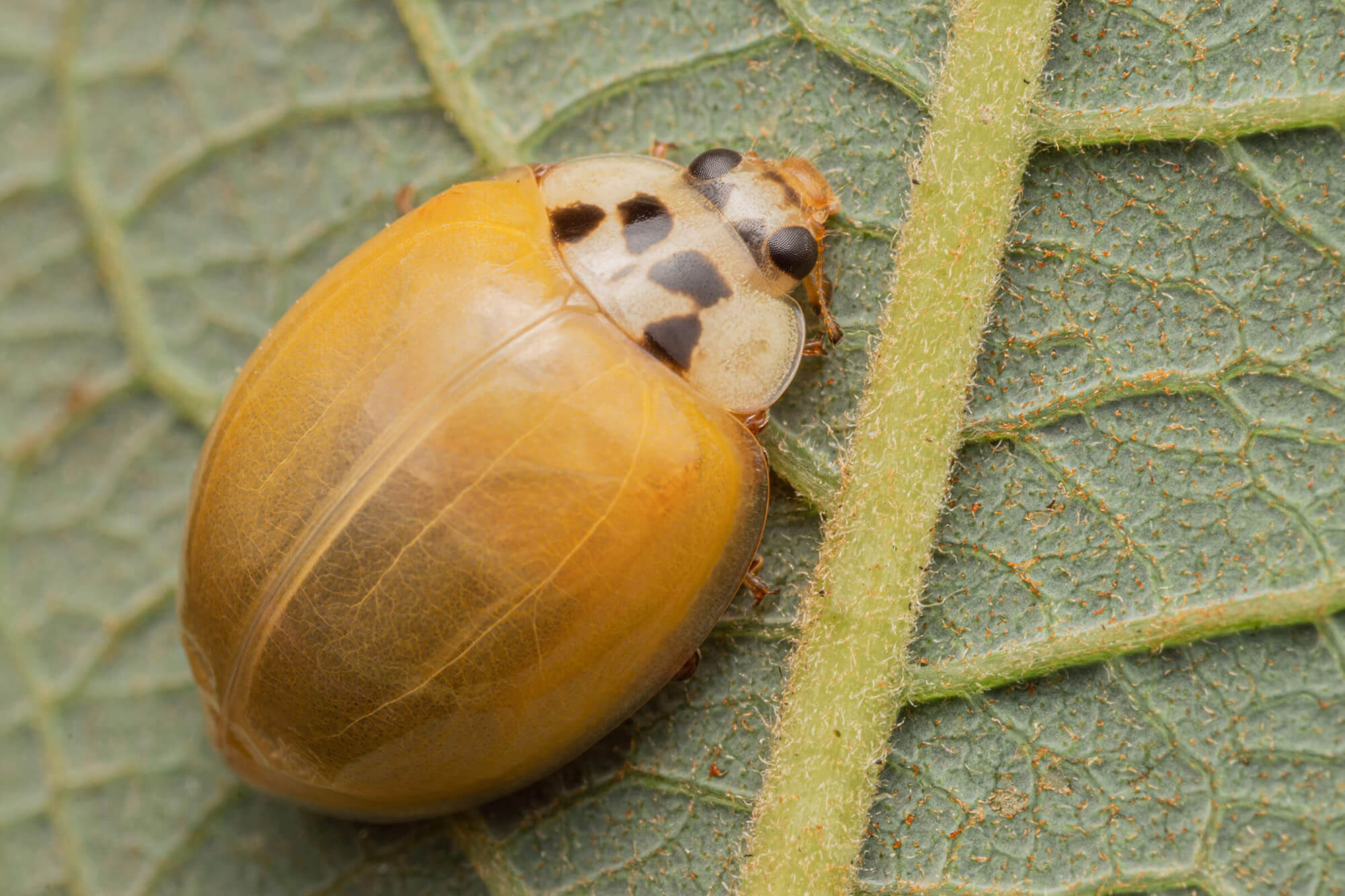 A yellow bug sitting on a leaf