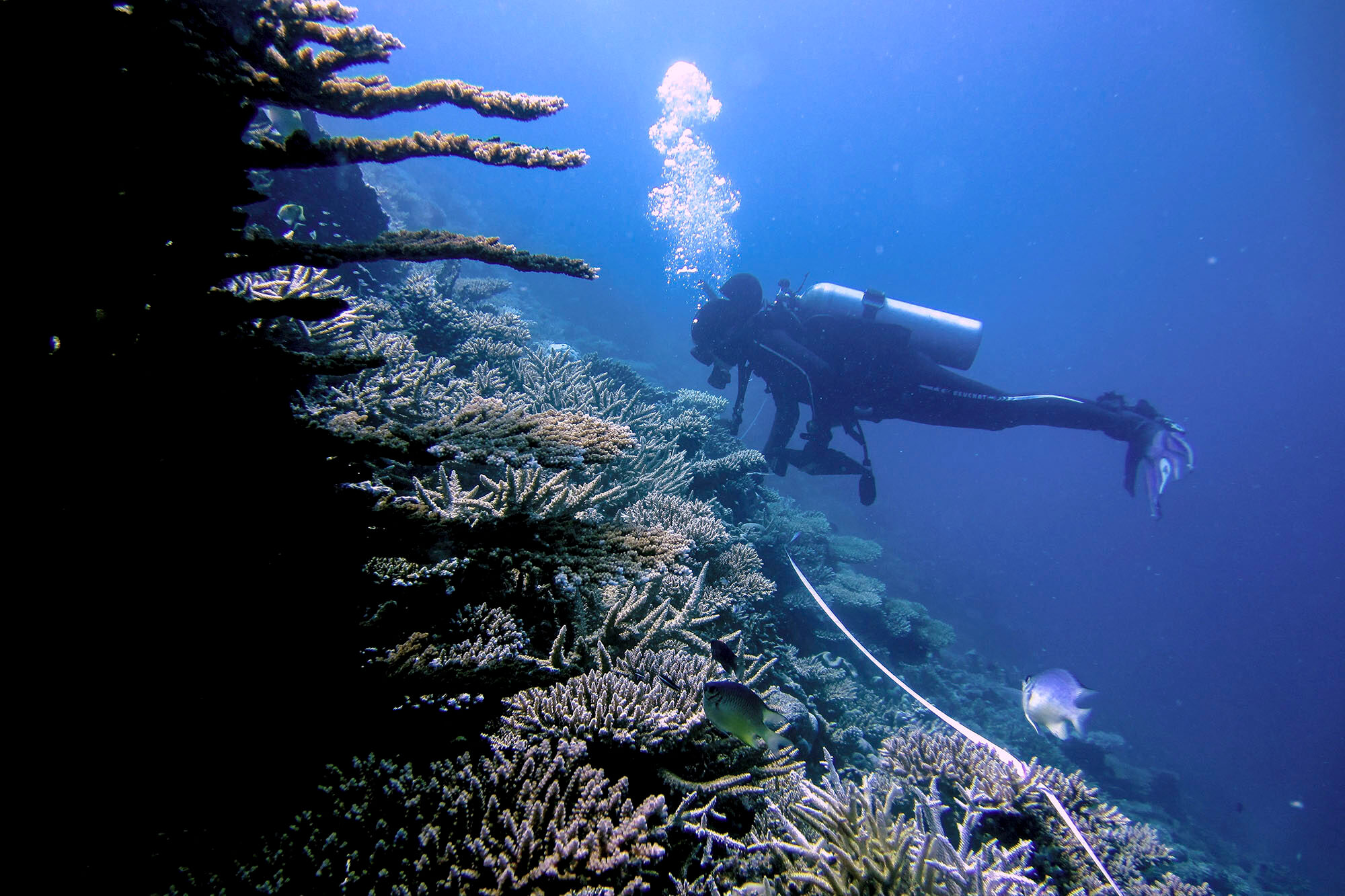 Zoology academic diving to examine corals