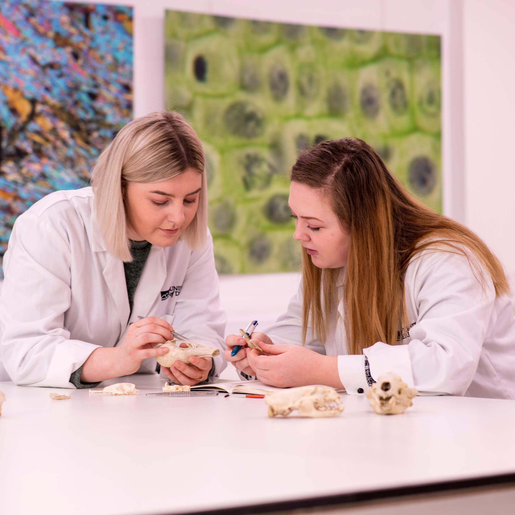 Two female students in a lab looking at animal skeletons