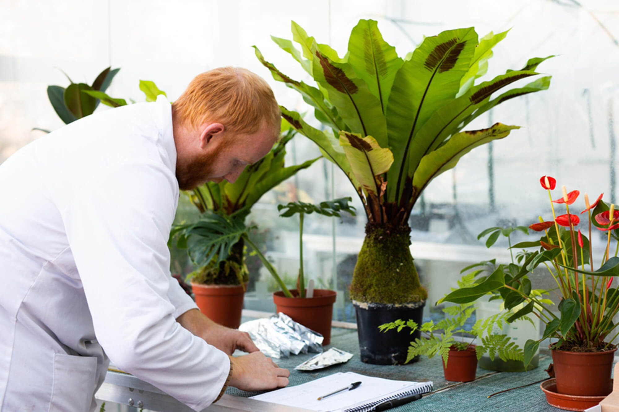 A male student in the glasshouse analysing plants