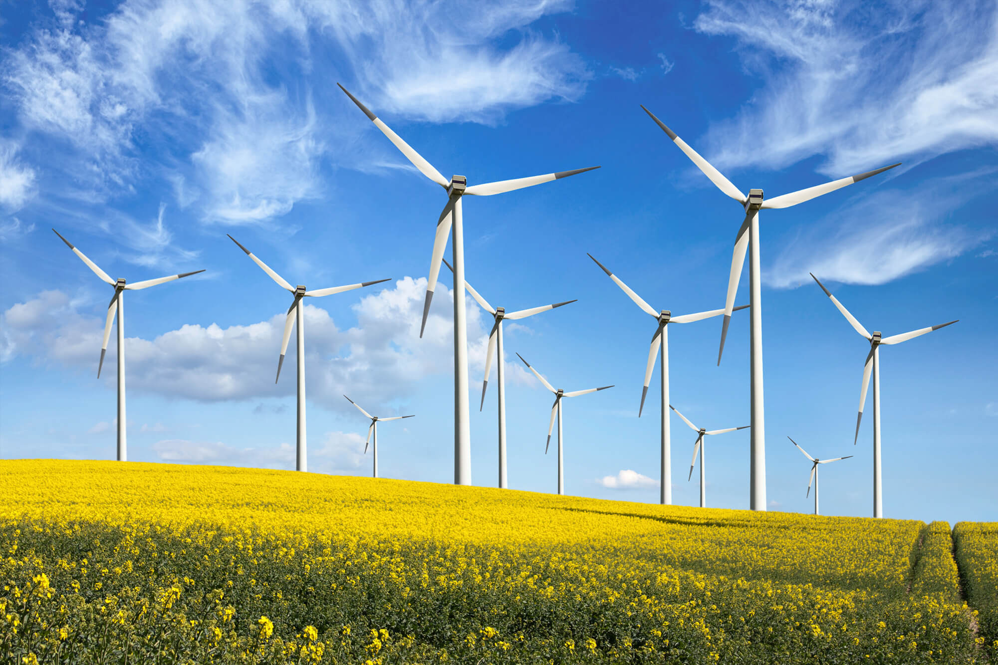 Wind turbines on a hill with yellow flowers and a blue sky in the background.