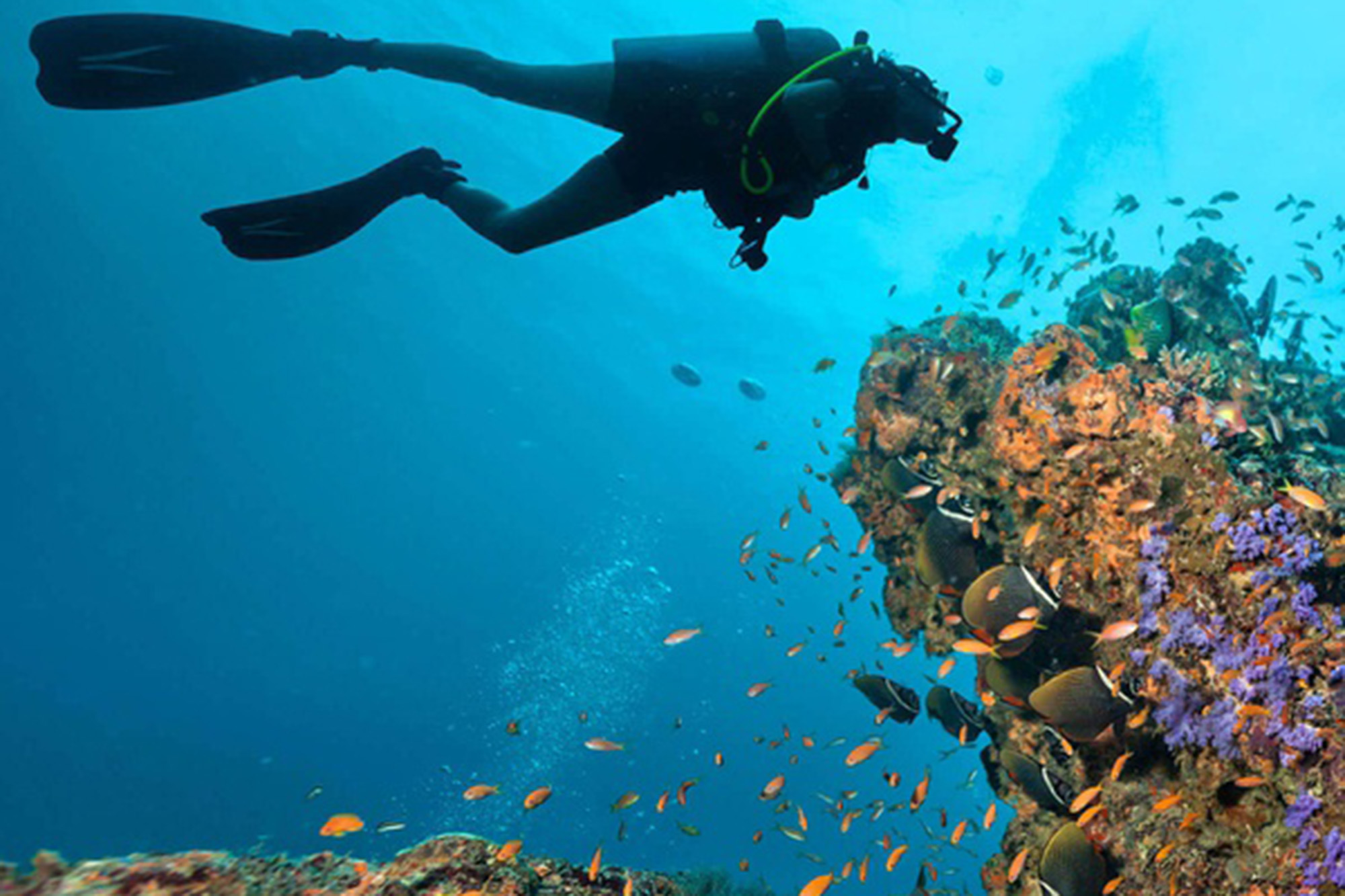 diver swimming by corals