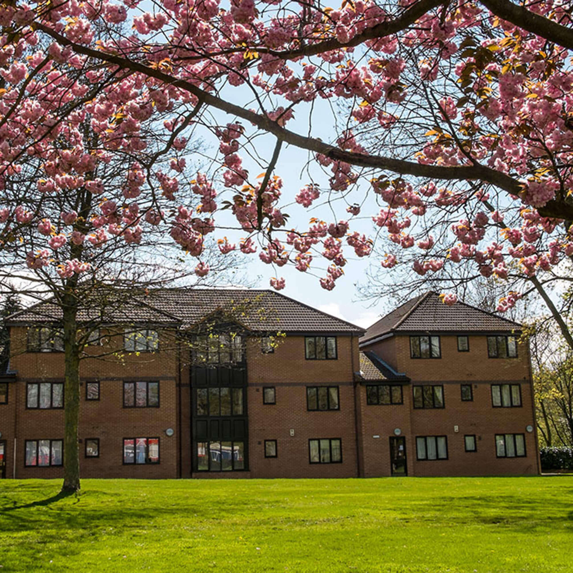 Flamsteed Court with cherry blossom tree in bloom