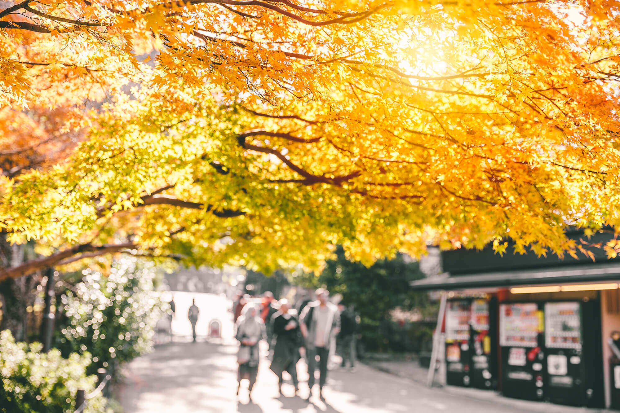 People walking under an autumnal tree