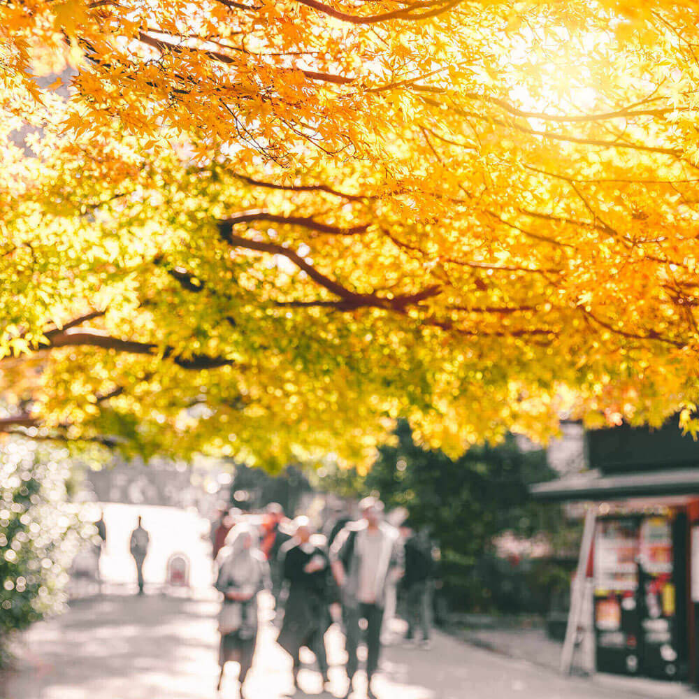people walking under an autumn tree