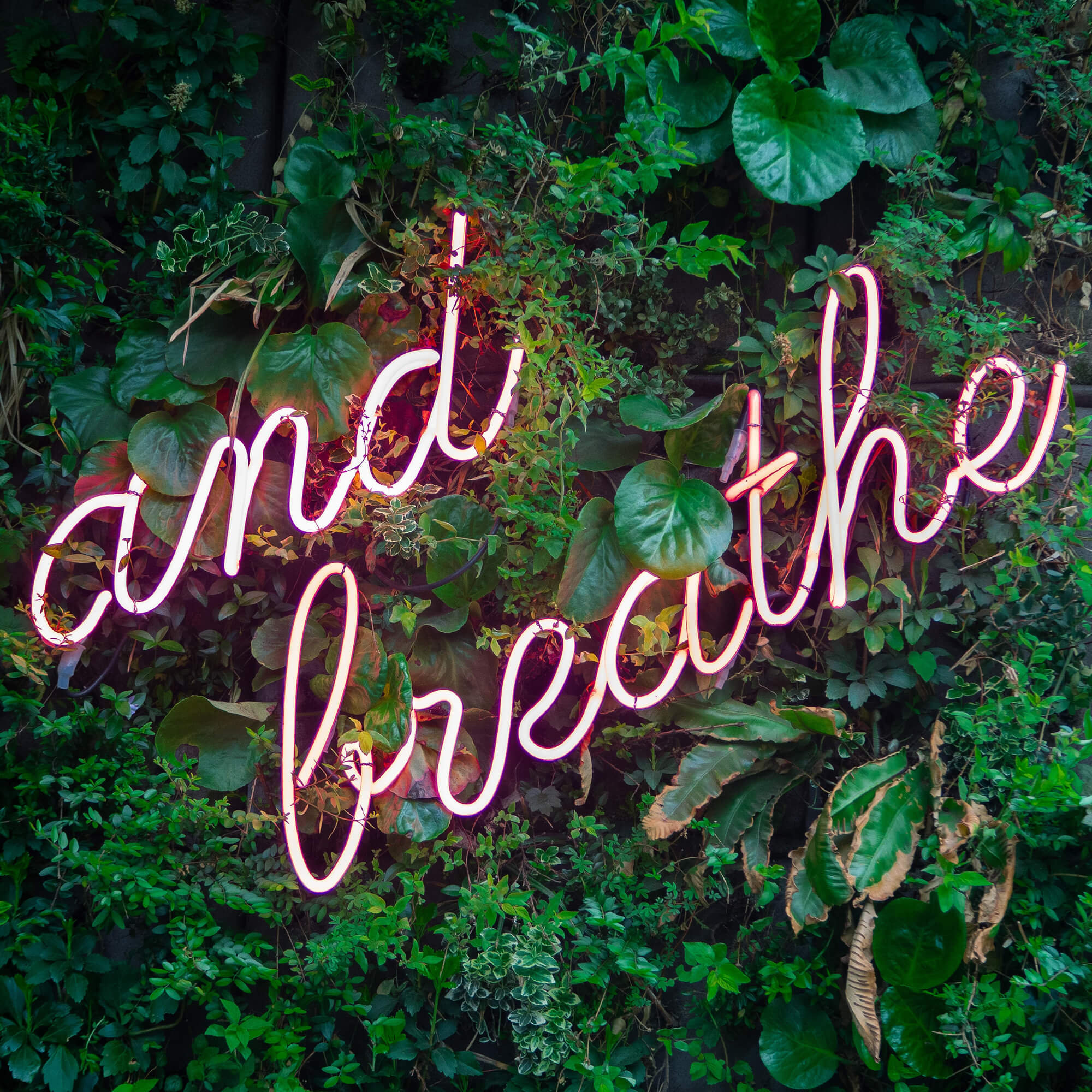 A pink neon sign that says 'and breathe' mounted in greenery