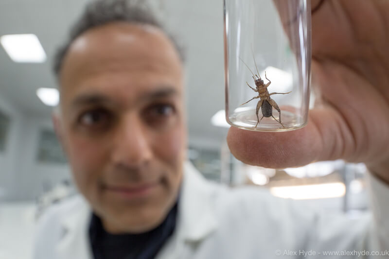 A person holding a cricket