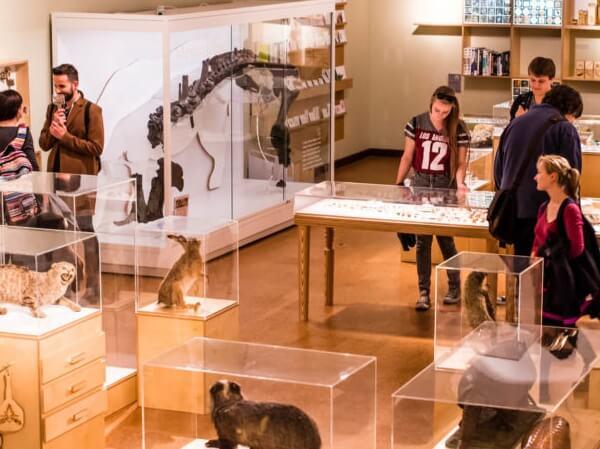 People browsing displays at Derby Museum