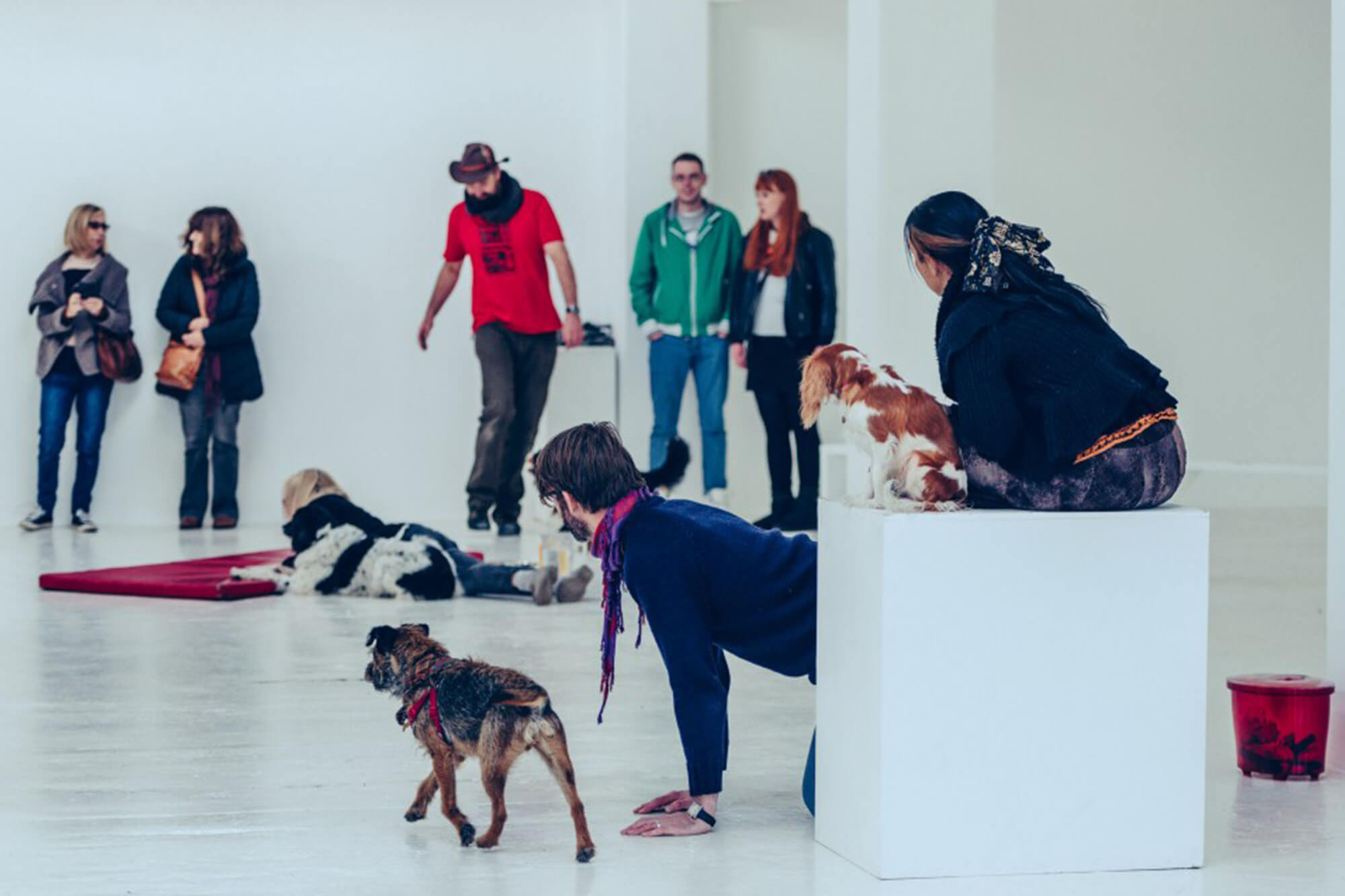 Group of people in a white room standing and lying on the floor amongst three dogs.
