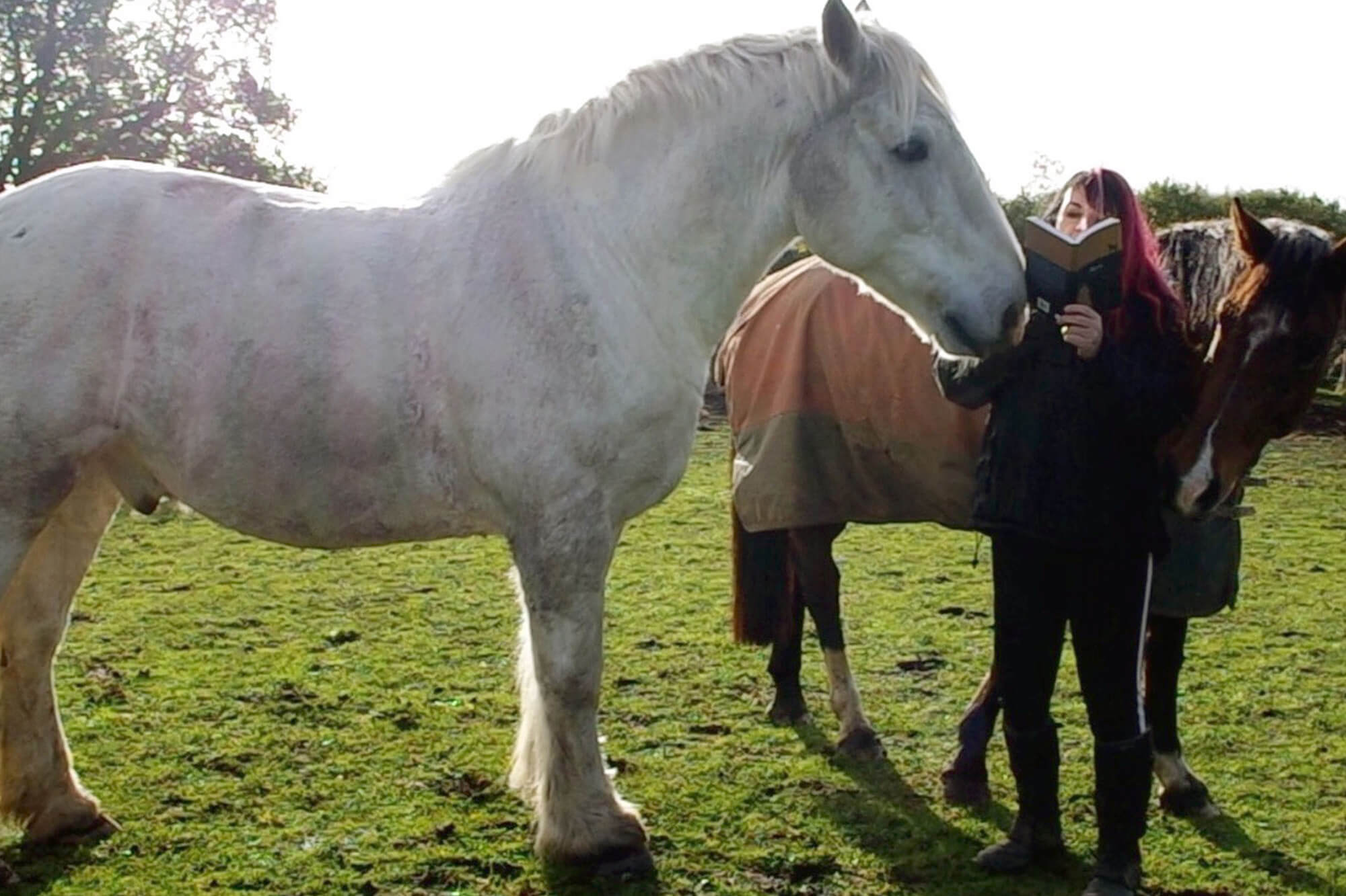 Ang Bartram standing next to two horses in a field, holding an open book.